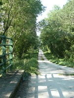 chemin-blanc-dans-le-marais